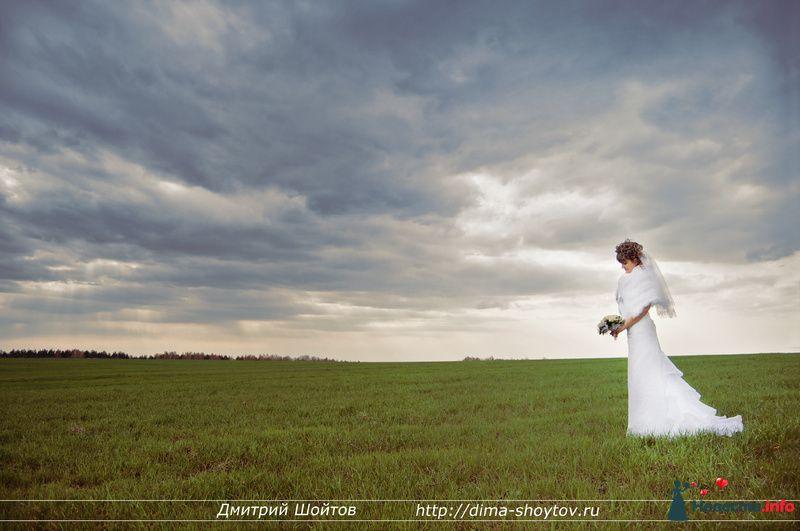 Фото 119721 в коллекции фотограф Дмитрий Шойтов