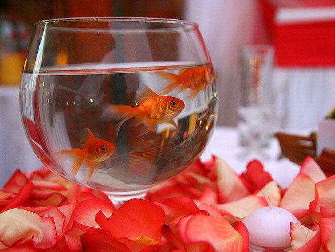 Поздравление на свадьбу золотая рыбка