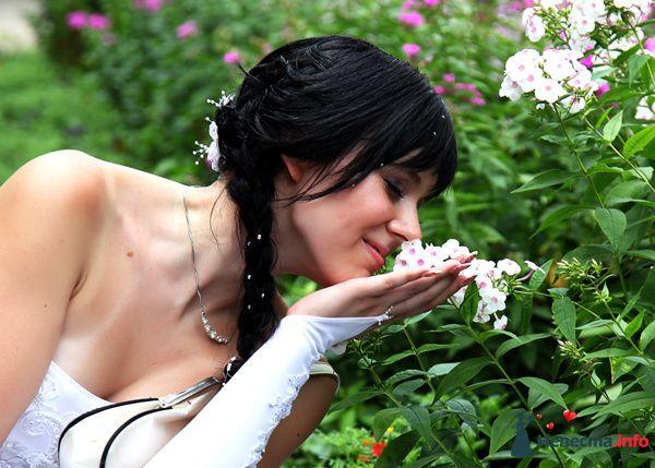 Фото 130308 в коллекции Свадьба - Полевничий Геннадий