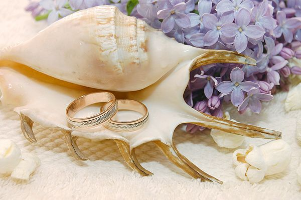 Морская ракушка с кольцами - фото 2068566 Kotytina