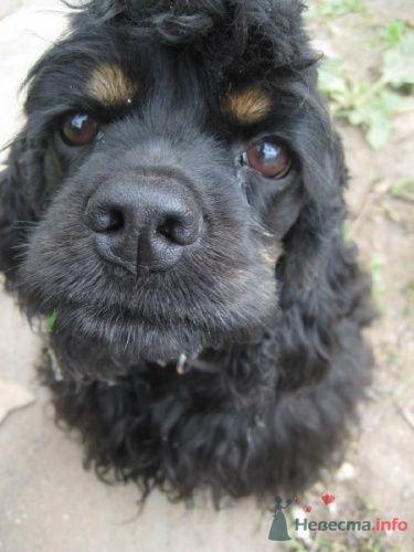 собакин - фото 16022 Невеста01