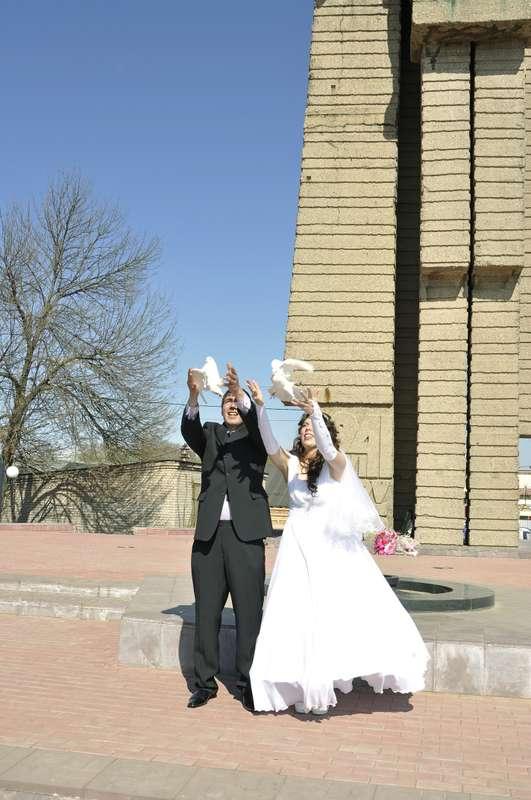 Фото 2102034 в коллекции Мои свадьбы - Видеограф Елена Дубова
