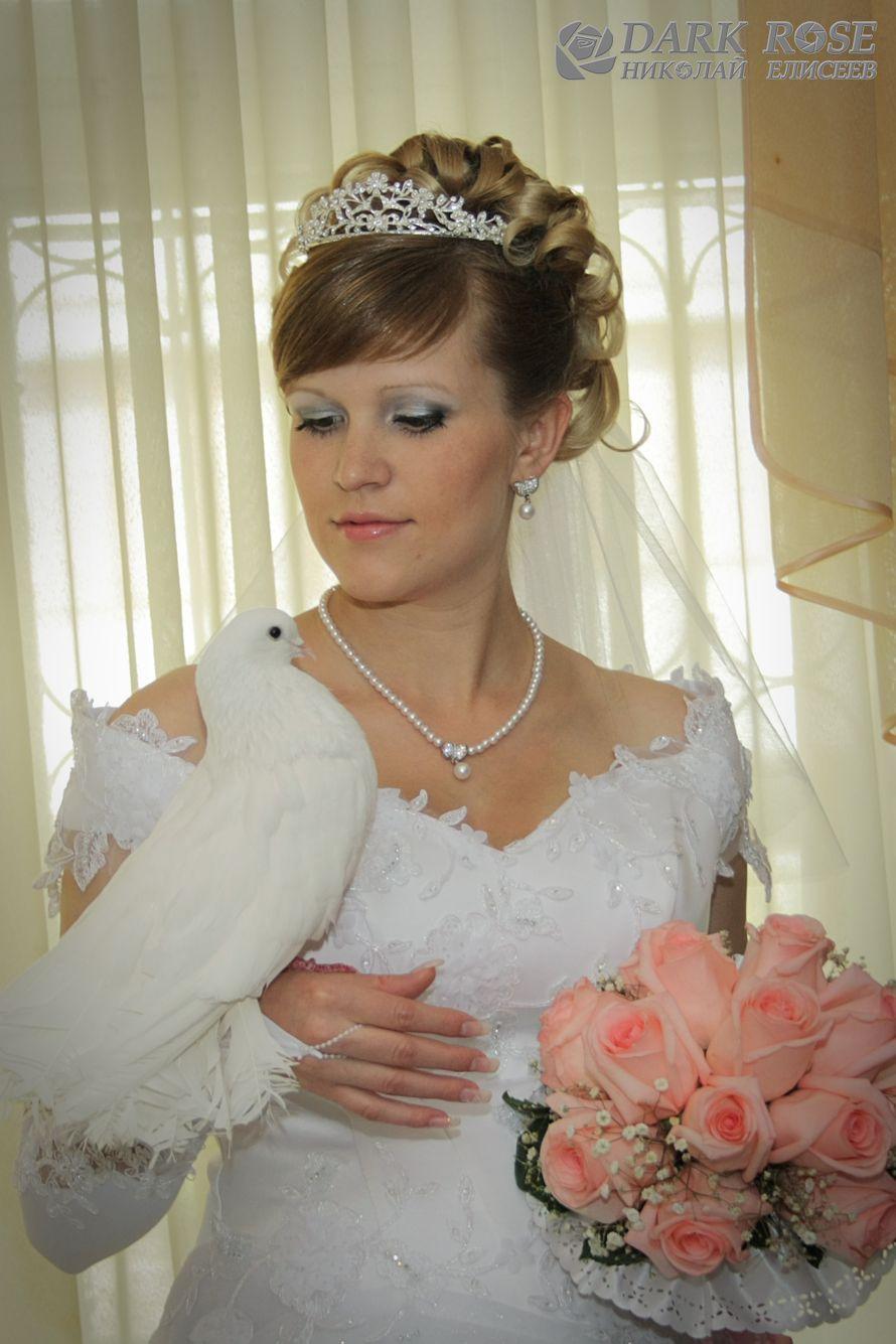 Фото 1769699 в коллекции Мои фотографии - Dark rose - фото и видеосъёмка свадеб