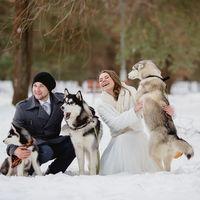 Собаки хаски, животные на свадьбе, зимняя свадьба в парке