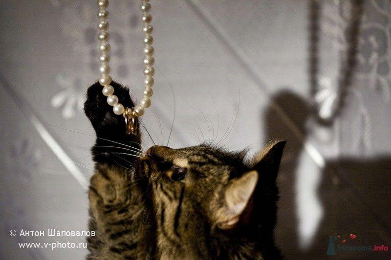 Фото 43617 в коллекции Всякие всякости - Свадебные фотографы StoryOfMoments