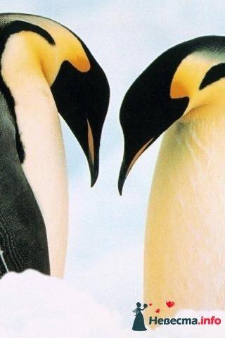 Фото 172302 в коллекции Пингвинья любовь - Пингвин-Тур - туристическая компания