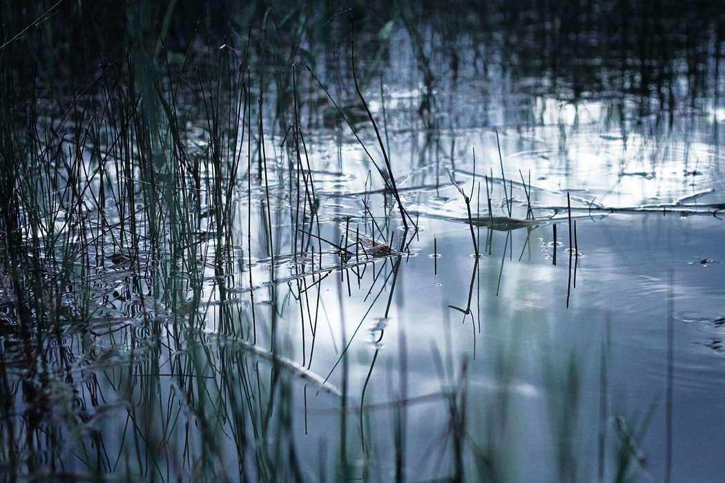 Фото 2311606 в коллекции Мои фотографии - Фотограф Beliawska