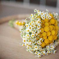 Букет невесты из ромашек и желтых краспедий