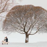 Зимняя сказка (красное по белому)