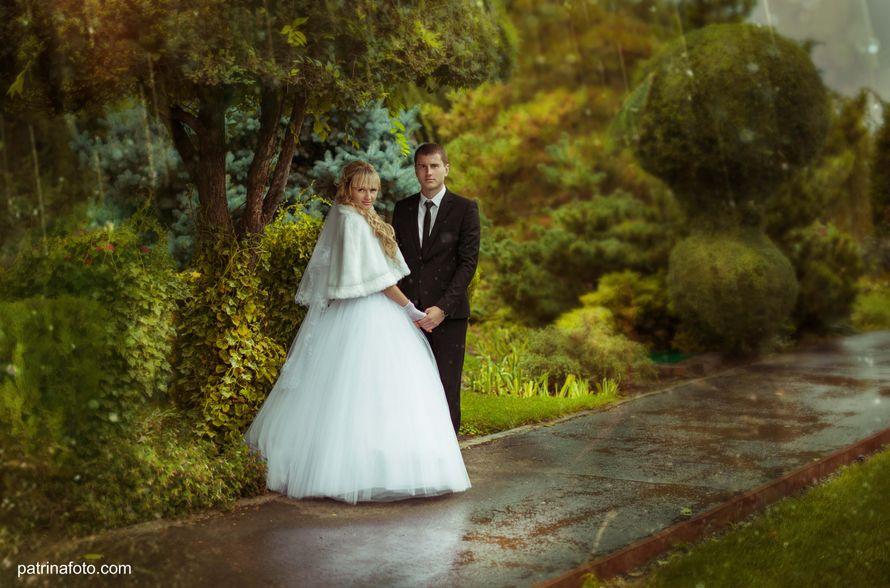 Фото 2642055 в коллекции Свадебные фото. - Свадебный фотограф Евгения Патрина