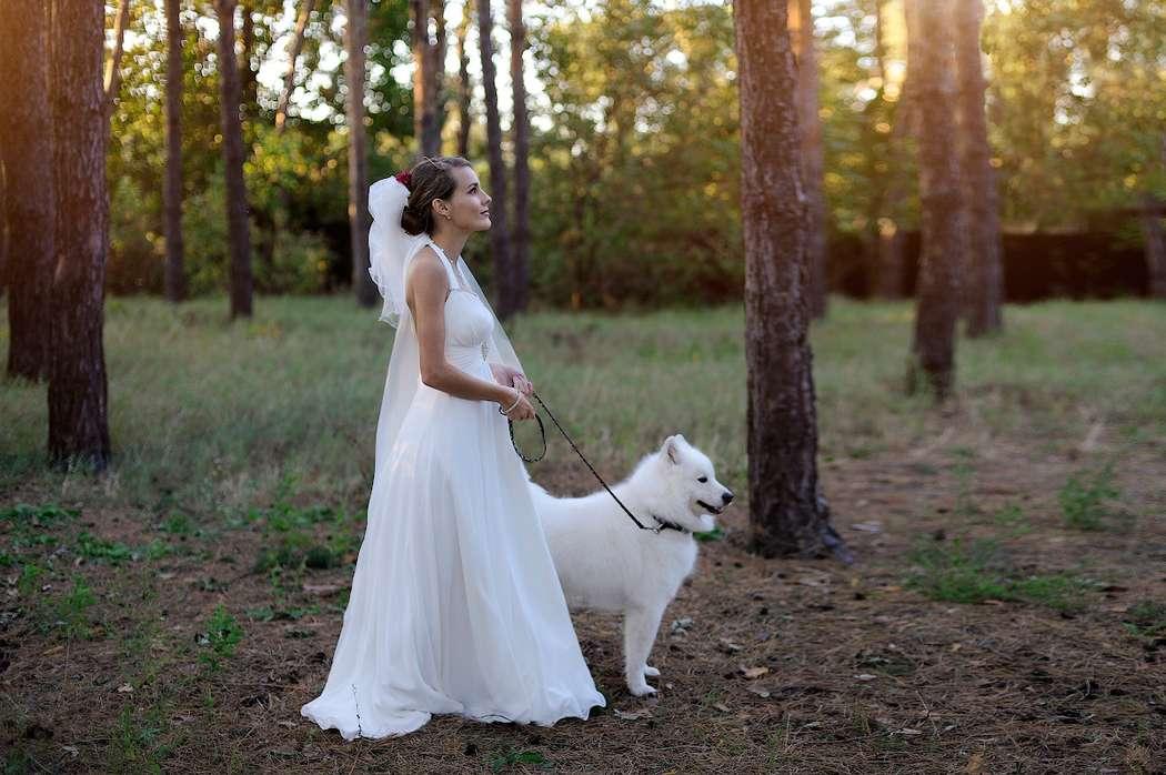 Невеста на поводке фото фото 202-436