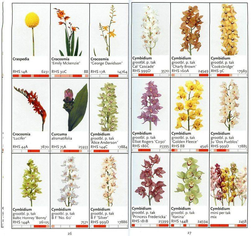 хранение логинов цветы срезка названия с картинками последнее