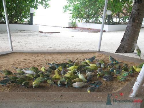 Фото 39734 в коллекции Медовый месяц на Мальдивах