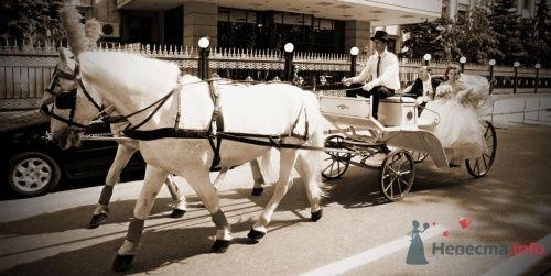 """Фото 19155 в коллекции Мои фотографии - Свадебная компания """"KST"""""""
