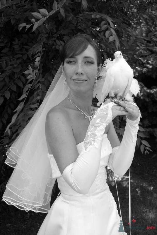 Фото 35377 в коллекции Наша свадьба - Катринка@Leopardik