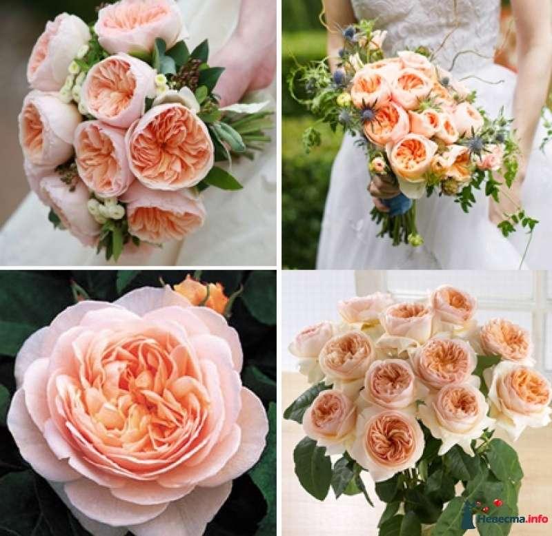 гражданина, каталог сортов роз с картинками флористика строению две односкатные