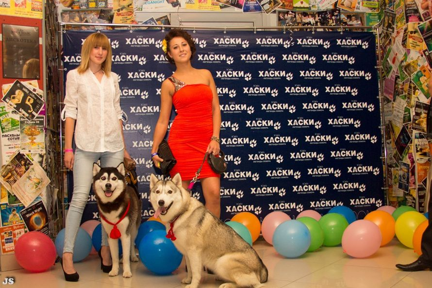 Фото 5474749 в коллекции Фото сессия с собаками - Праздничное агенство Event Art