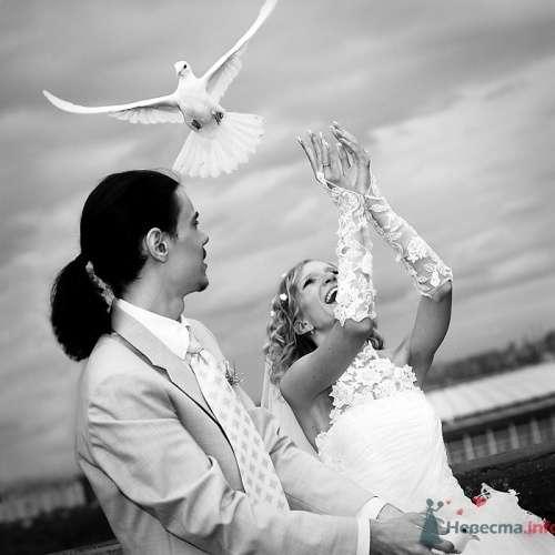 Фотография жениха и невесты с голубями. - фото 581 Анжелика Саакова - фотограф