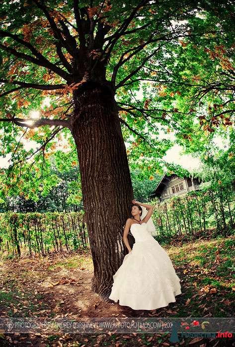 Фото 91663 в коллекции Фотографии со свадеб - Фотограф Андрей Поршнев