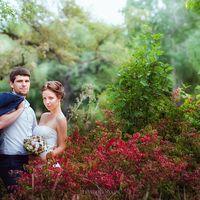 яркие краски леса в фотосессия на природе