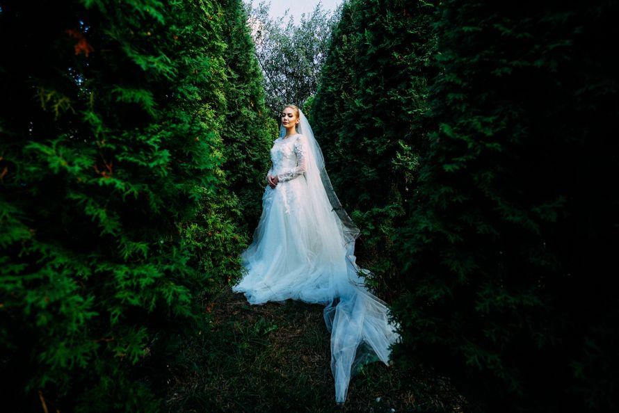 Фото 11824462 в коллекции WEDDING - Фотограф Алим Кажаров