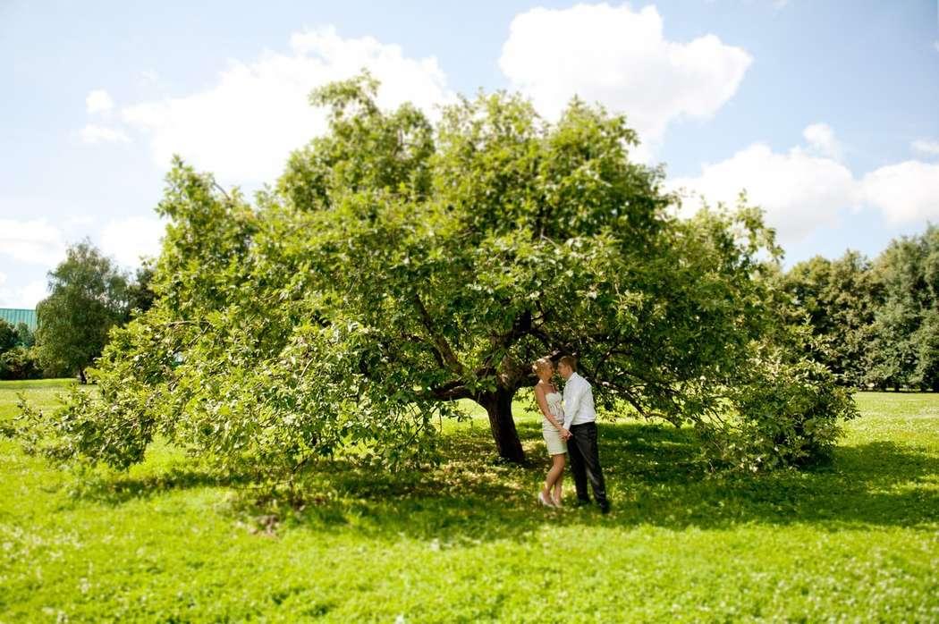 Дерево, пара , лето - фото 3775635 Фотограф  Анна Лапенко