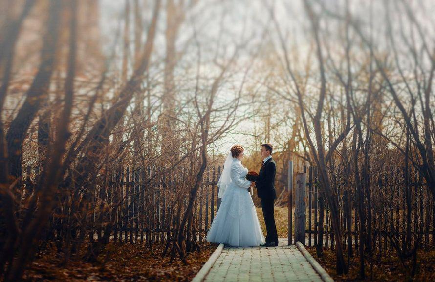 Фото 16648646 в коллекции Wedding/Свадьбы - Фотограф и видеограф Денис и Дмитрий Стенько