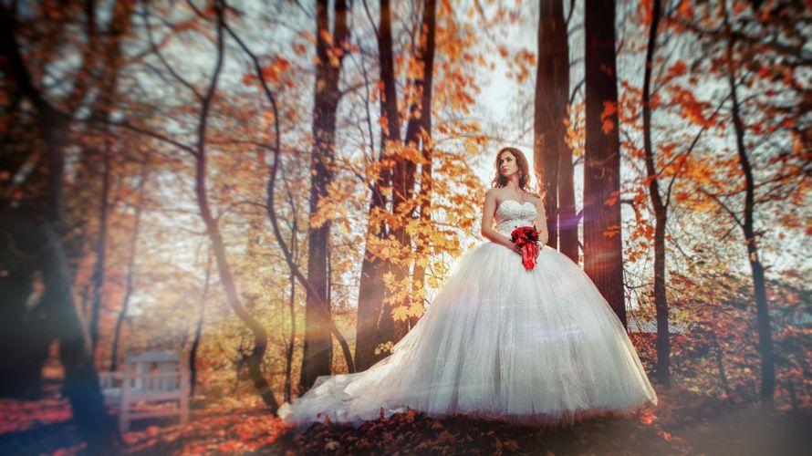 Фото 19884565 в коллекции Wedding/Свадьбы - Фотограф и видеограф Денис и Дмитрий Стенько