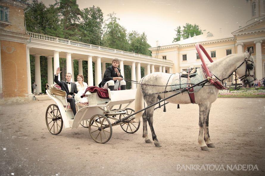 Фото 5314923 в коллекции портфолио - Видеографы Надежда и Сергей Панкратовы