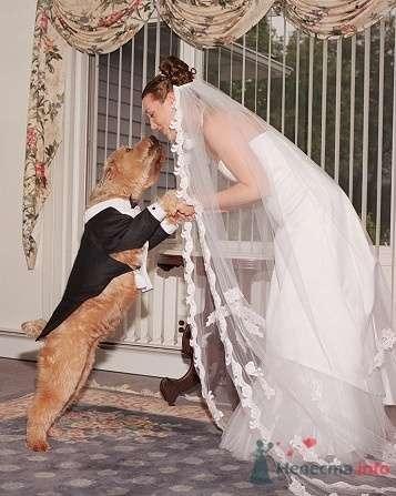 Фото 5459 в коллекции Свадебные курьезы - leshechka