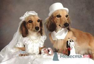 Фото 5461 в коллекции Свадебные курьезы - leshechka