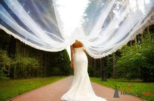Фото 7968 в коллекции Свадебная фотография - leshechka