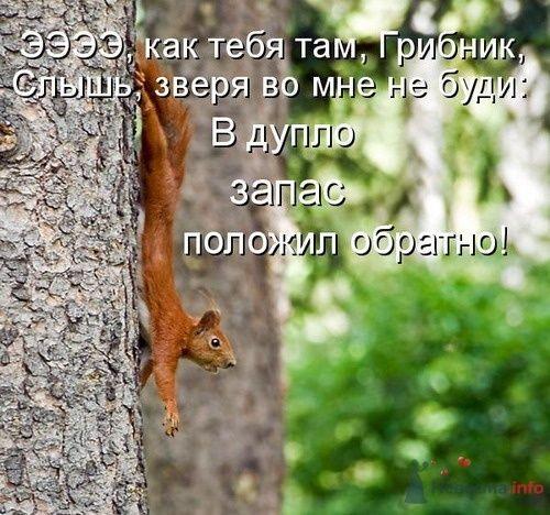 Фото 9346 в коллекции Свадебная суета - leshechka