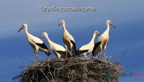 Фото 9357 в коллекции Свадебная суета - leshechka