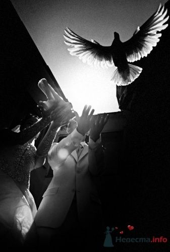 Фото 19529 в коллекции Мои фотографии - leshechka