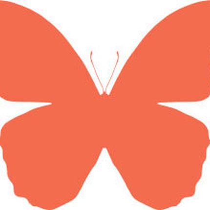 Открытка с Премиум тропической бабочкой, крылья 13-19 см., разные виды