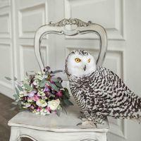 свадьба с полярной совой, утро невесты, цветы, букет, невеста, полярная сова, сова, сборы
