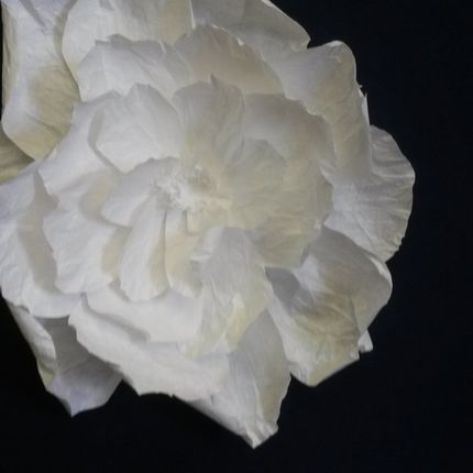 Цветы для свадебного декора