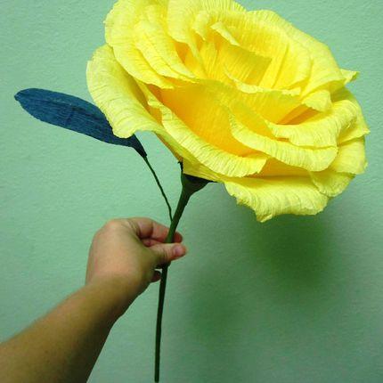 Роза крупная для фотосессий