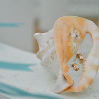 Морская ракушка с обручальными кольцами