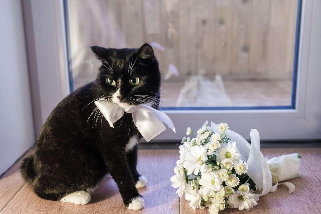 Картинка кот жених
