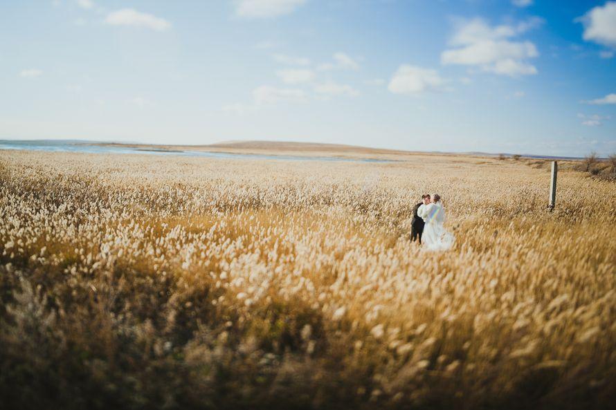 Фото 8583970 в коллекции Портфолио - Свадебный фотограф Дмитрий Кох