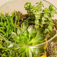 Флорариум Шар 25 см «Лес» с суккулентами (ваза 7,5 л, ⌀25 см)   #22