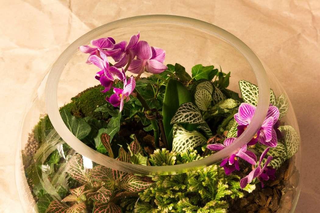 Шар 25 см «Тропический лес» с мини-орхидеями (ваза 7,5 л, ⌀25 см)   #12 - фото 9450262 Мастерская флорариумов Юлии Шумилкиной