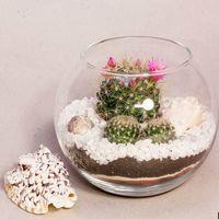 Мини-флорариум Шар 11 см «Море» с суккулентами.   #24