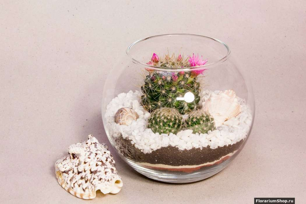 Мини-флорариум Шар 11 см «Море» с суккулентами.   #24 - фото 9450296 Мастерская флорариумов Юлии Шумилкиной