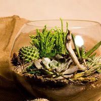 Флорариум Шар 25 см «Лес» с суккулентами (ваза 7,5 л, ⌀25 см)   #27