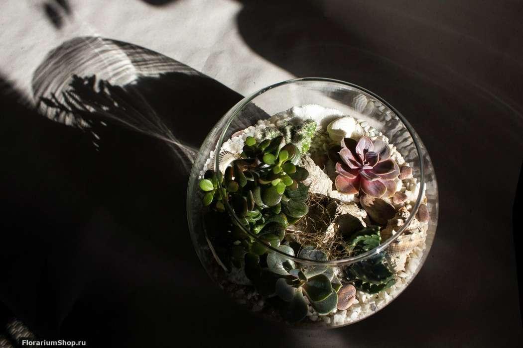 Флорариум Шар 22 см «Море» с суккулентами (ваза 4 л, ⌀22 см)   #36 - фото 9876034 Мастерская флорариумов Юлии Шумилкиной