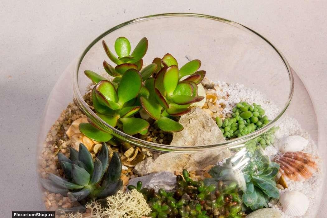 Флорариум Шар 22 см «Море» с суккулентами (ваза 4 л, ⌀22 см)   #33 - фото 9876040 Мастерская флорариумов Юлии Шумилкиной