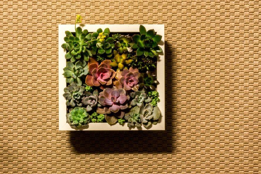 Картина из суккулентов 23x23 см   #41 - фото 9980508 Мастерская флорариумов Юлии Шумилкиной